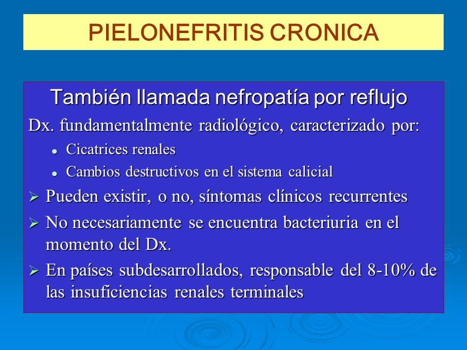 PIELONEFRITIS CRONICA También llamada nefropatía por reflujo También llamada nefropatía por reflujo Dx. fundamentalmente radiológico, caracterizado po