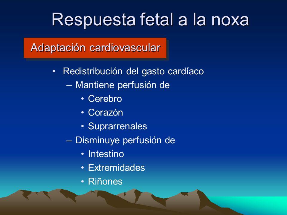 Adaptación cardiovascular Redistribución del gasto cardíaco –Mantiene perfusión de Cerebro Corazón Suprarrenales –Disminuye perfusión de Intestino Ext