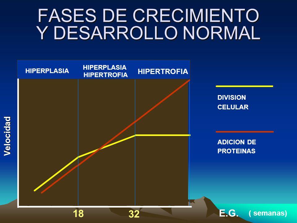 HIPERPLASIA HIPERTROFIA E.G. DIVISION CELULAR ADICION DE HIPERTROFIA 18 32 PROTEINAS ( semanas) FASES DE CRECIMIENTO Y DESARROLLO NORMAL Velocidad