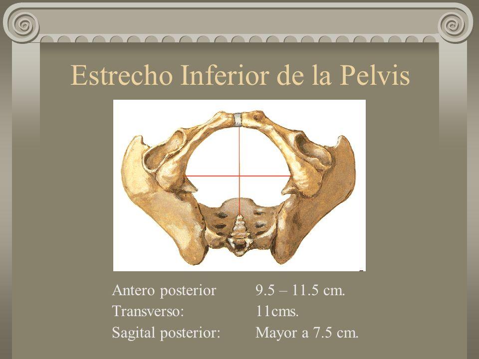 Estrecho Inferior de la Pelvis Antero posterior9.5 – 11.5 cm. Transverso:11cms. Sagital posterior:Mayor a 7.5 cm.