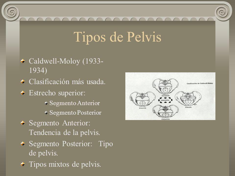 Tipos de Pelvis Caldwell-Moloy (1933- 1934) Clasificación más usada. Estrecho superior: Segmento Anterior Segmento Posterior Segmento Anterior: Tenden