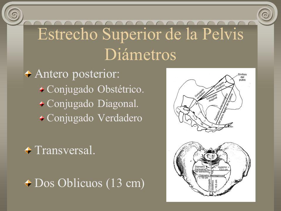 Estrecho Superior de la Pelvis Diámetros Antero posterior: Conjugado Obstétrico. Conjugado Diagonal. Conjugado Verdadero Transversal. Dos Oblicuos (13