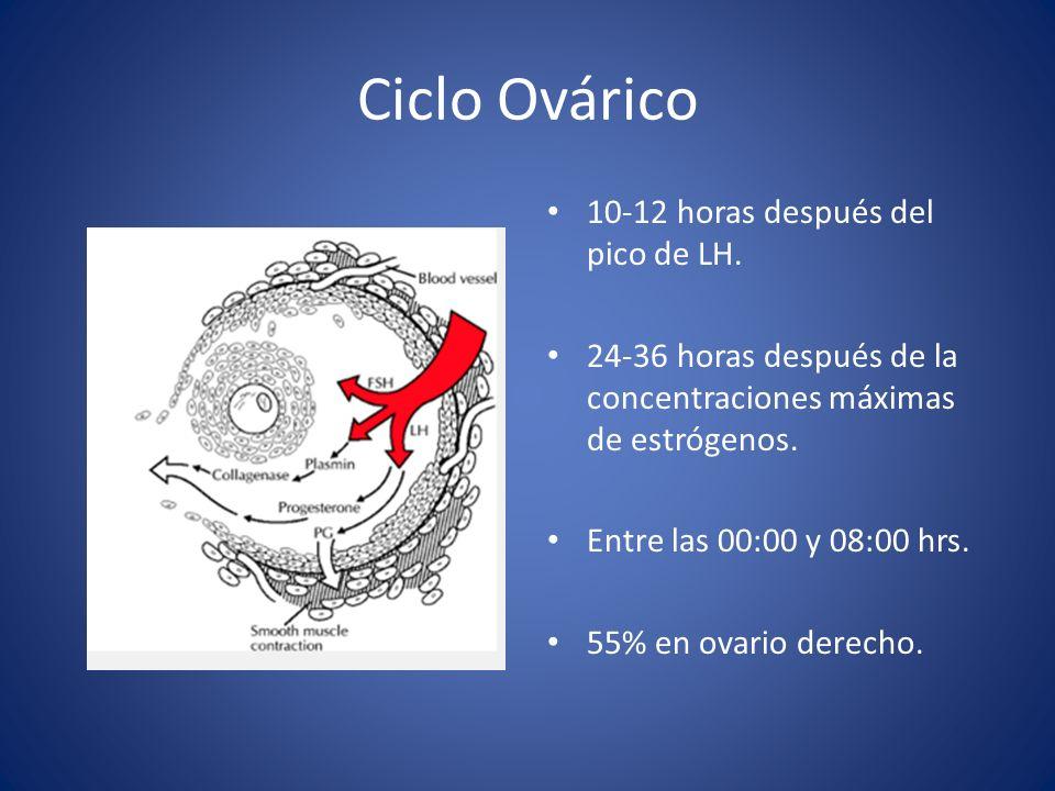 Ciclo Ovárico 10-12 horas después del pico de LH. 24-36 horas después de la concentraciones máximas de estrógenos. Entre las 00:00 y 08:00 hrs. 55% en
