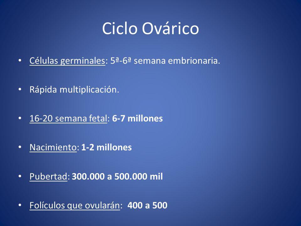 Ciclo Ovárico Células germinales: 5ª-6ª semana embrionaria. Rápida multiplicación. 16-20 semana fetal: 6-7 millones Nacimiento: 1-2 millones Pubertad: