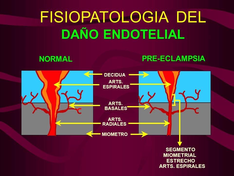 FISIOPATOLOGIA DEL DAÑO ENDOTELIAL DECIDUA ARTS. ESPIRALES ARTS. BASALES ARTS. RADIALES MIOMETRO NORMAL PRE-ECLAMPSIA SEGMENTO MIOMETRIAL ESTRECHO ART