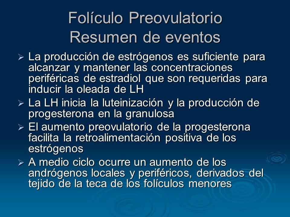 Folículo Preovulatorio Resumen de eventos La producción de estrógenos es suficiente para alcanzar y mantener las concentraciones periféricas de estrad
