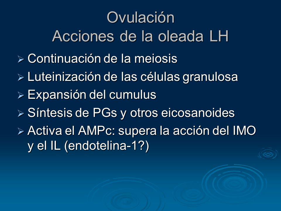 Ovulación Acciones de la oleada LH Continuación de la meiosis Continuación de la meiosis Luteinización de las células granulosa Luteinización de las c