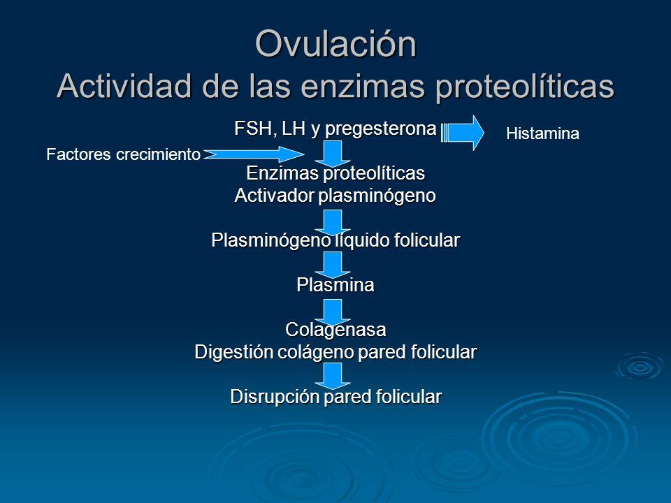 Ovulación Actividad de las enzimas proteolíticas FSH, LH y pregesterona Enzimas proteolíticas Activador plasminógeno Plasminógeno líquido folicular Pl