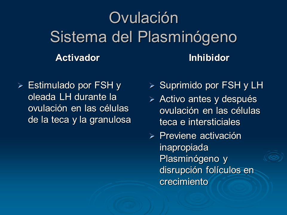 Ovulación Sistema del Plasminógeno Activador Estimulado por FSH y oleada LH durante la ovulación en las células de la teca y la granulosa Estimulado p