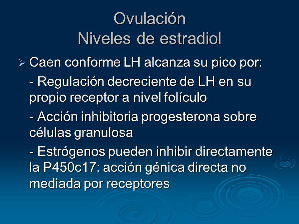 Ovulación Niveles de estradiol Caen conforme LH alcanza su pico por: Caen conforme LH alcanza su pico por: - Regulación decreciente de LH en su propio