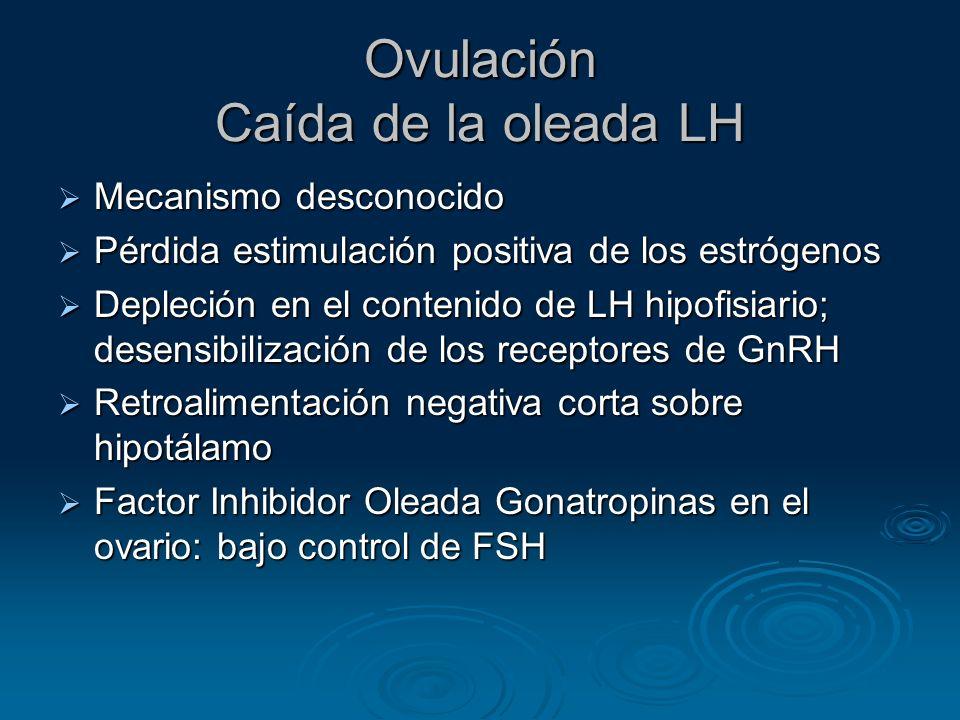 Ovulación Caída de la oleada LH Mecanismo desconocido Mecanismo desconocido Pérdida estimulación positiva de los estrógenos Pérdida estimulación posit