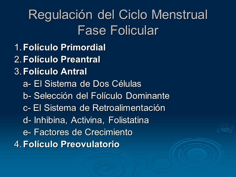 Folículo Primordial Resumen de eventos Folículo destinado a ovular es reclutado 2 días después inicio menstruación por influencia aumento FSH Folículo destinado a ovular es reclutado 2 días después inicio menstruación por influencia aumento FSH El crecimiento temprano de los folículos ocurre en el transcurso de muchos ciclos, pero el folículo ovulatorio proviene de un cohorte de folículos reclutados durante la Transición Lútea-Folicular El crecimiento temprano de los folículos ocurre en el transcurso de muchos ciclos, pero el folículo ovulatorio proviene de un cohorte de folículos reclutados durante la Transición Lútea-Folicular Duración total para alcanzar el estado preovulatorio: 85 días Duración total para alcanzar el estado preovulatorio: 85 días La mayoría de este tiempo (hasta un estadío tardío) envuelve respuestas que son independientes de la regulación hormonal La mayoría de este tiempo (hasta un estadío tardío) envuelve respuestas que son independientes de la regulación hormonal Eventualmente este cohorte de folículos (3-11 por ovario) sufren atresia si no son reclutados (rescatados) por la FSH Eventualmente este cohorte de folículos (3-11 por ovario) sufren atresia si no son reclutados (rescatados) por la FSH