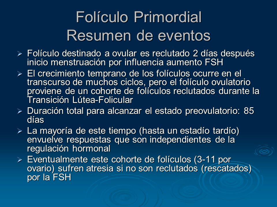 Folículo Primordial Resumen de eventos Folículo destinado a ovular es reclutado 2 días después inicio menstruación por influencia aumento FSH Folículo