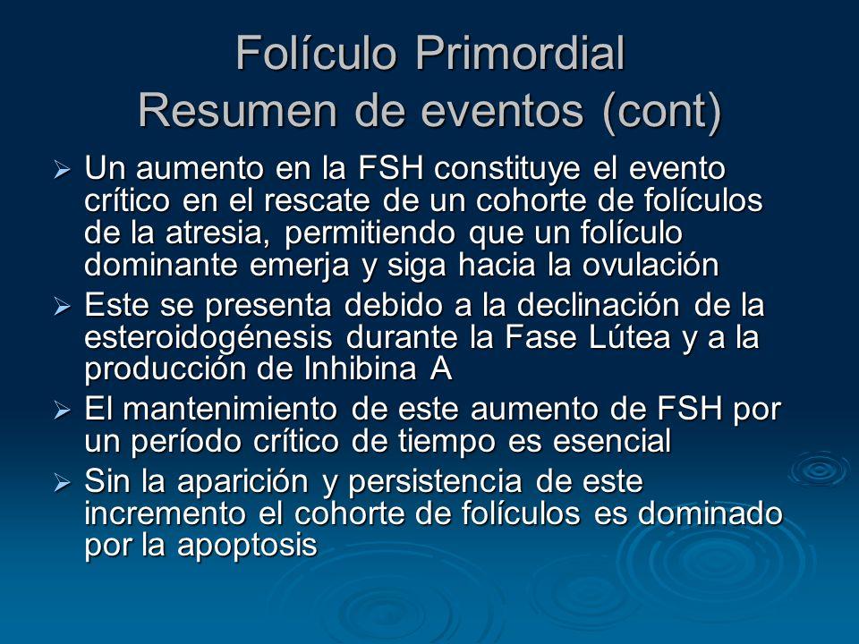 Folículo Primordial Resumen de eventos (cont) Un aumento en la FSH constituye el evento crítico en el rescate de un cohorte de folículos de la atresia