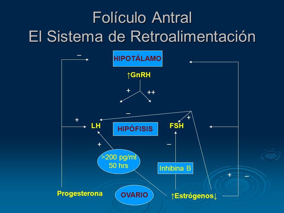 Folículo Antral El Sistema de Retroalimentación HIPOTÁLAMO HIPÓFISIS OVARIO GnRH LHFSH Progesterona Estrógenos + – + – Inhibina B >200 pg/ml 50 hrs –
