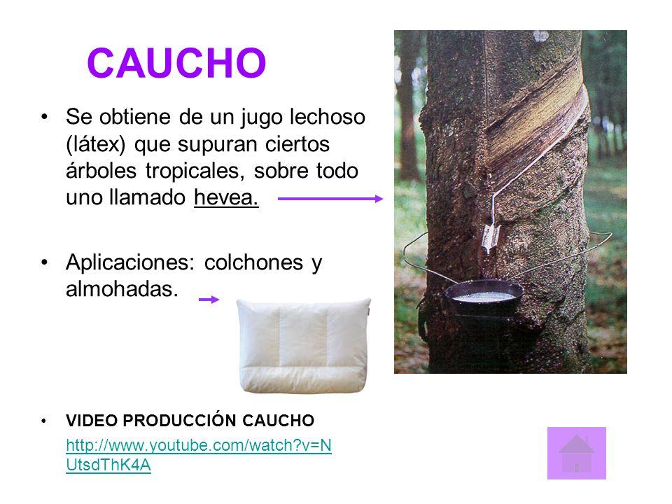 CAUCHO Se obtiene de un jugo lechoso (látex) que supuran ciertos árboles tropicales, sobre todo uno llamado hevea. Aplicaciones: colchones y almohadas