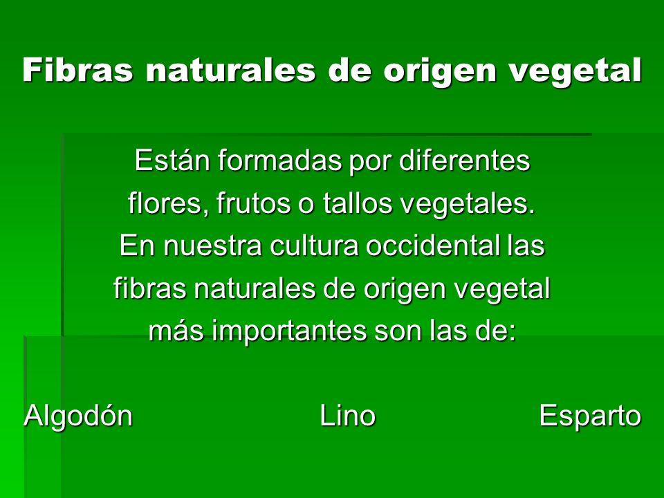 Fibras naturales de origen vegetal Están formadas por diferentes flores, frutos o tallos vegetales. En nuestra cultura occidental las fibras naturales