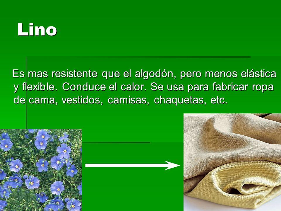 Lino Es mas resistente que el algodón, pero menos elástica y flexible. Conduce el calor. Se usa para fabricar ropa de cama, vestidos, camisas, chaquet