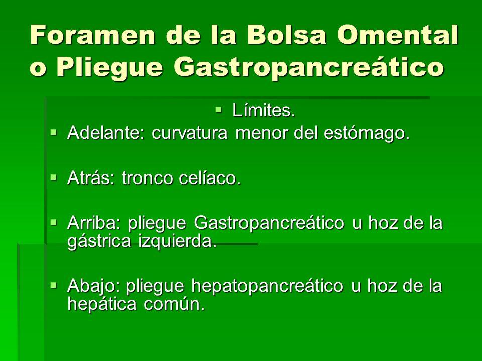 Foramen de la Bolsa Omental o Pliegue Gastropancreático Límites. Límites. Adelante: curvatura menor del estómago. Adelante: curvatura menor del estóma