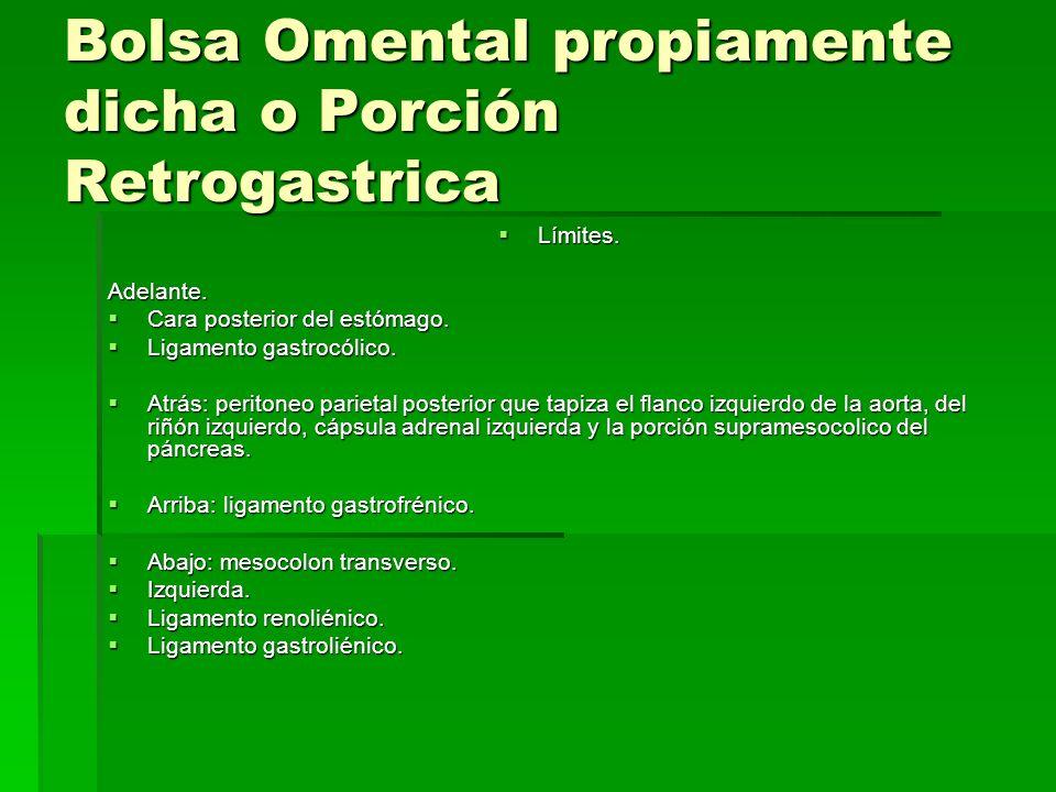 Bolsa Omental propiamente dicha o Porción Retrogastrica Límites. Límites.Adelante. Cara posterior del estómago. Cara posterior del estómago. Ligamento