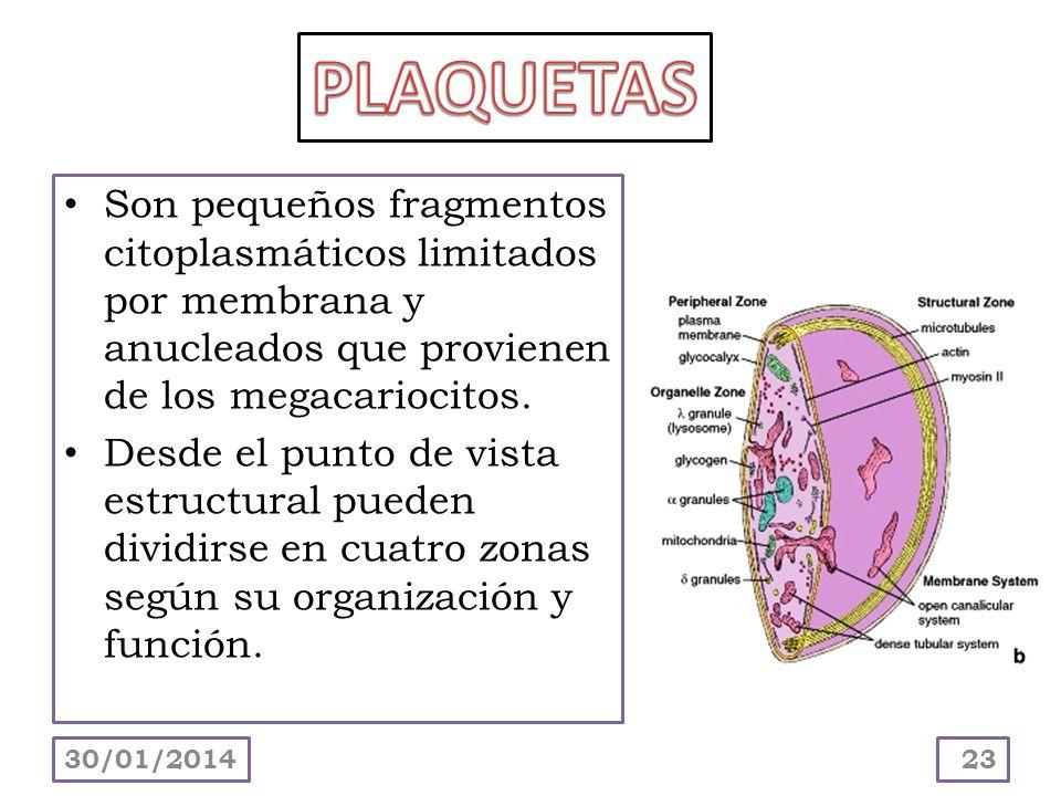 Son pequeños fragmentos citoplasmáticos limitados por membrana y anucleados que provienen de los megacariocitos. Desde el punto de vista estructural p
