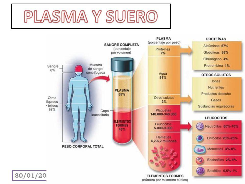 Son las principales células funcionales del sistema linfático o inmune.
