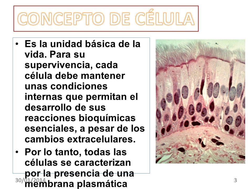 Es la unidad básica de la vida. Para su supervivencia, cada célula debe mantener unas condiciones internas que permitan el desarrollo de sus reaccione