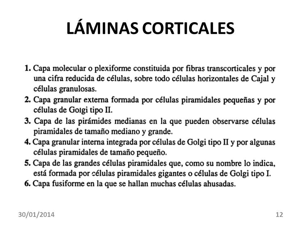 30/01/201412 LÁMINAS CORTICALES