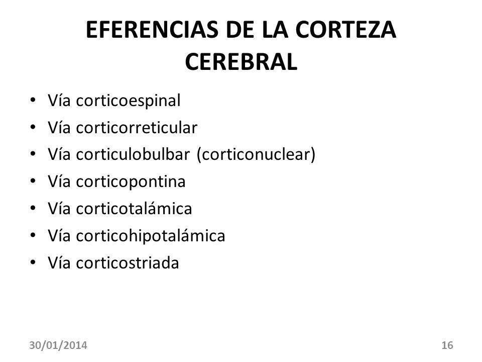 30/01/201416 EFERENCIAS DE LA CORTEZA CEREBRAL Vía corticoespinal Vía corticorreticular Vía corticulobulbar (corticonuclear) Vía corticopontina Vía co