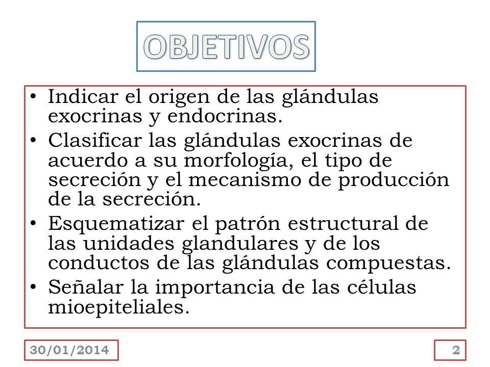 Indicar el origen de las glándulas exocrinas y endocrinas. Clasificar las glándulas exocrinas de acuerdo a su morfología, el tipo de secreción y el me