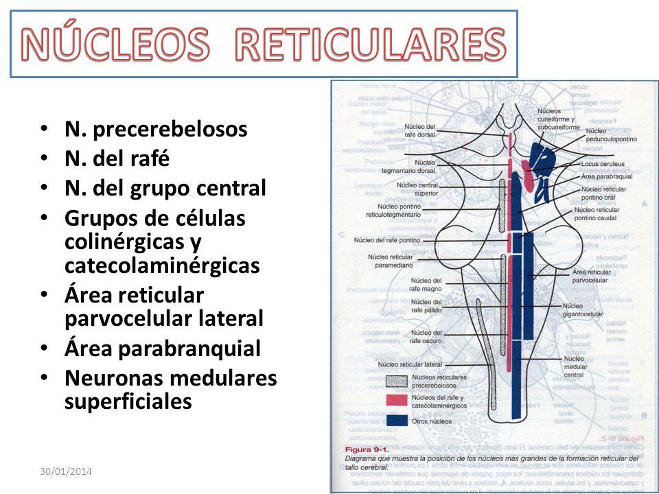 N. precerebelosos N. del rafé N. del grupo central Grupos de células colinérgicas y catecolaminérgicas Área reticular parvocelular lateral Área parabr