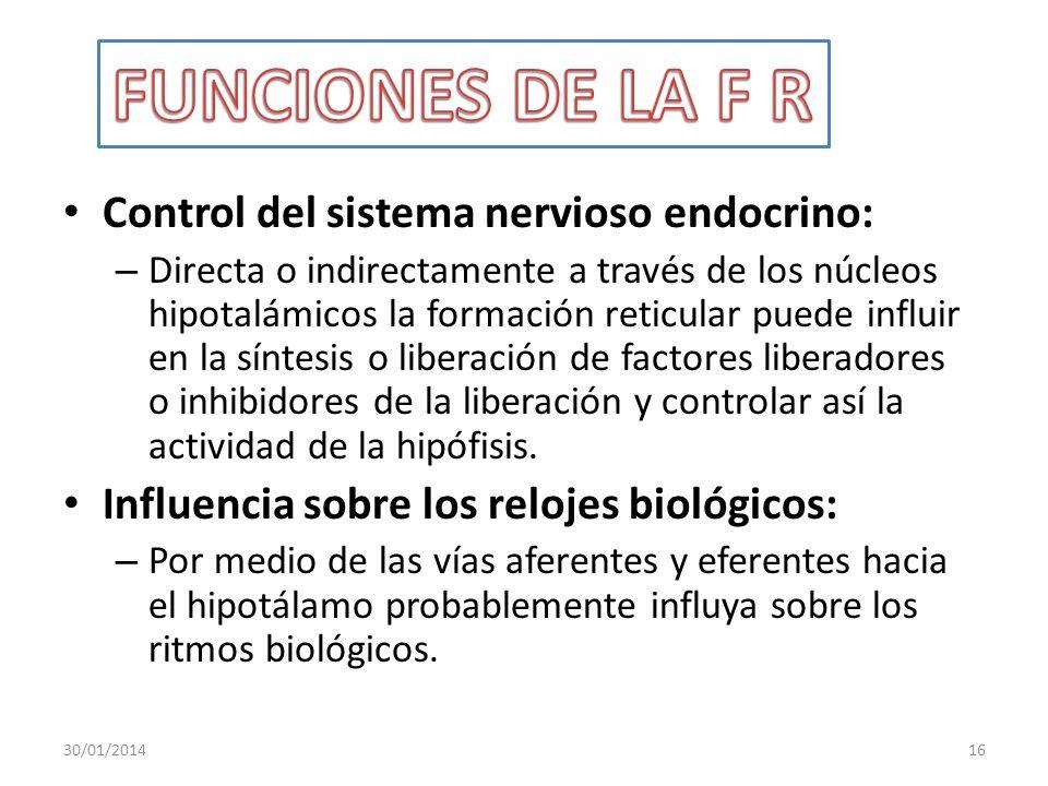 Control del sistema nervioso endocrino: – Directa o indirectamente a través de los núcleos hipotalámicos la formación reticular puede influir en la sí