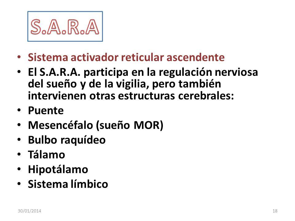 Sistema activador reticular ascendente El S.A.R.A. participa en la regulación nerviosa del sueño y de la vigilia, pero también intervienen otras estru