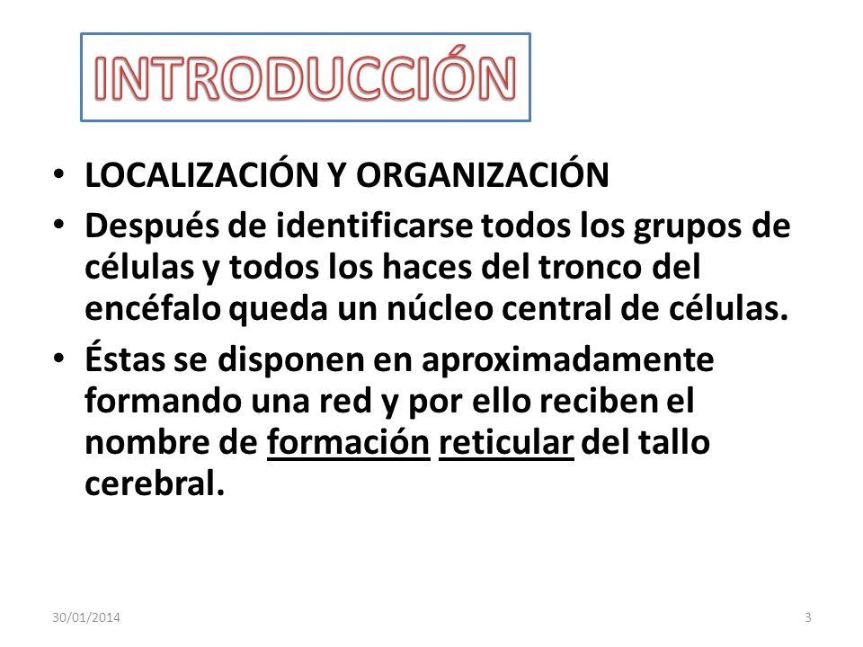 LOCALIZACIÓN Y ORGANIZACIÓN Después de identificarse todos los grupos de células y todos los haces del tronco del encéfalo queda un núcleo central de