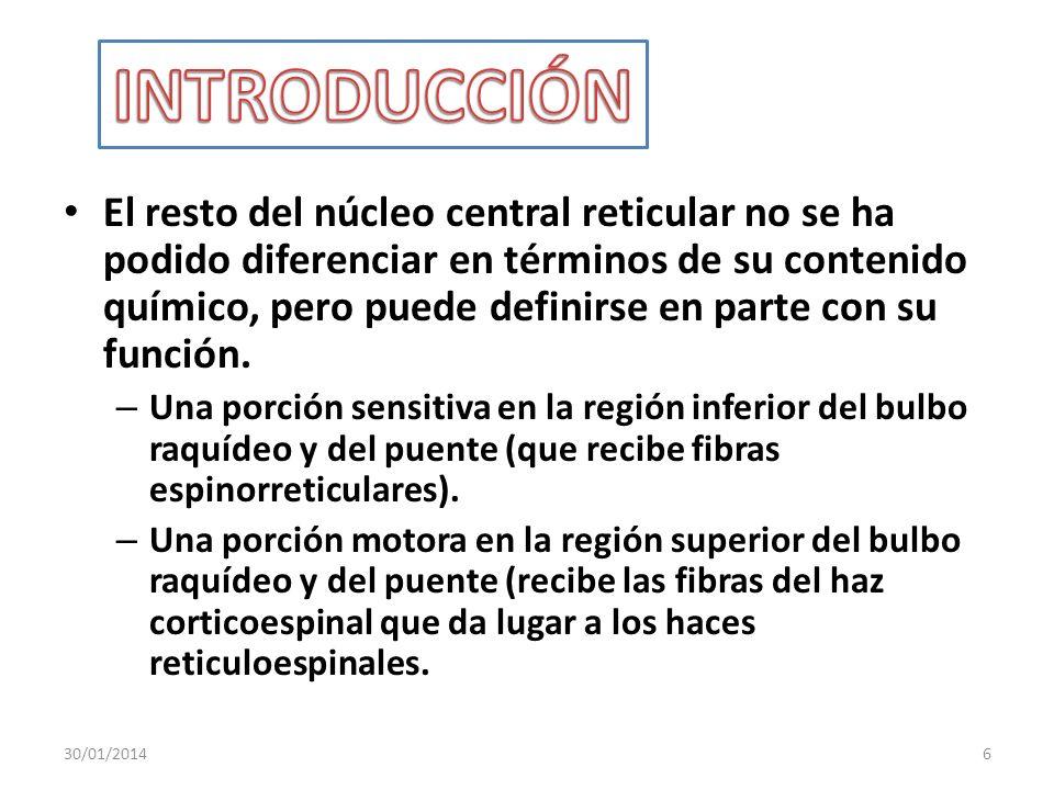El resto del núcleo central reticular no se ha podido diferenciar en términos de su contenido químico, pero puede definirse en parte con su función. –