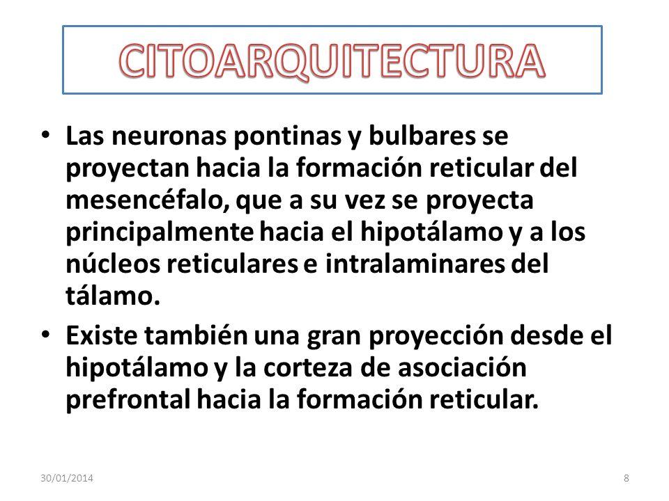 Las neuronas pontinas y bulbares se proyectan hacia la formación reticular del mesencéfalo, que a su vez se proyecta principalmente hacia el hipotálam
