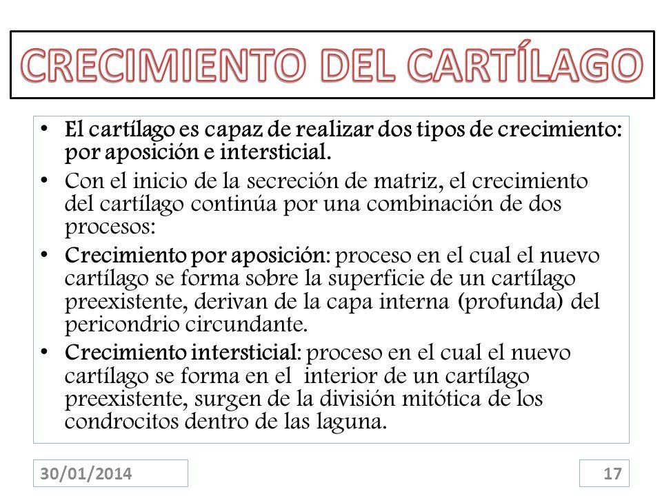 El cartílago es capaz de realizar dos tipos de crecimiento: por aposición e intersticial. Con el inicio de la secreción de matriz, el crecimiento del