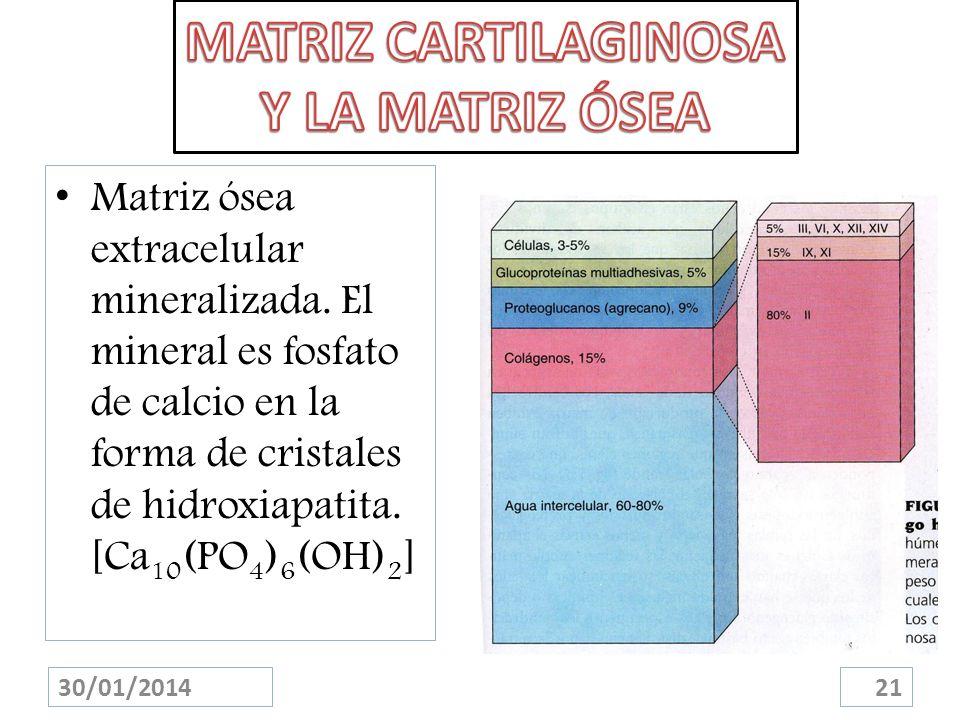 Matriz ósea extracelular mineralizada. El mineral es fosfato de calcio en la forma de cristales de hidroxiapatita. [Ca 10 (PO 4 ) 6 (OH) 2 ] 30/01/201