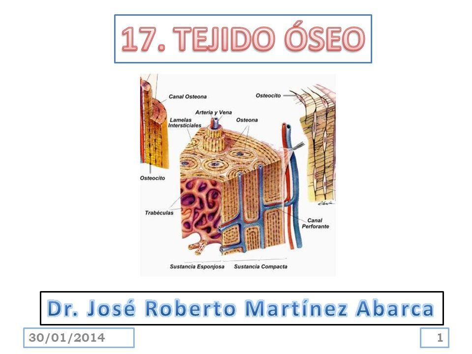 Es la célula osteoformadora diferenciada que secreta matriz ósea.