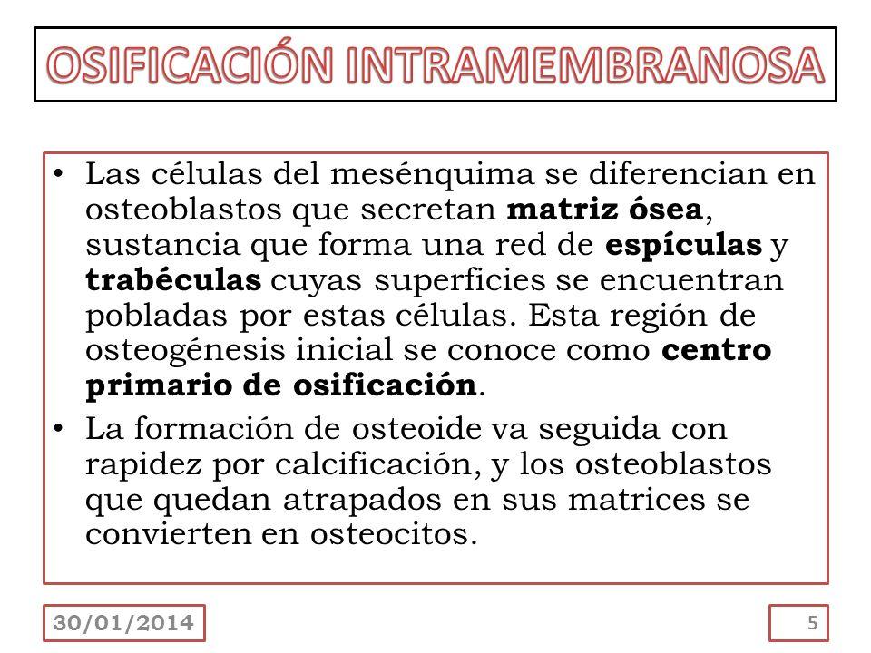 La función del osteoclasto es la resorción ósea.