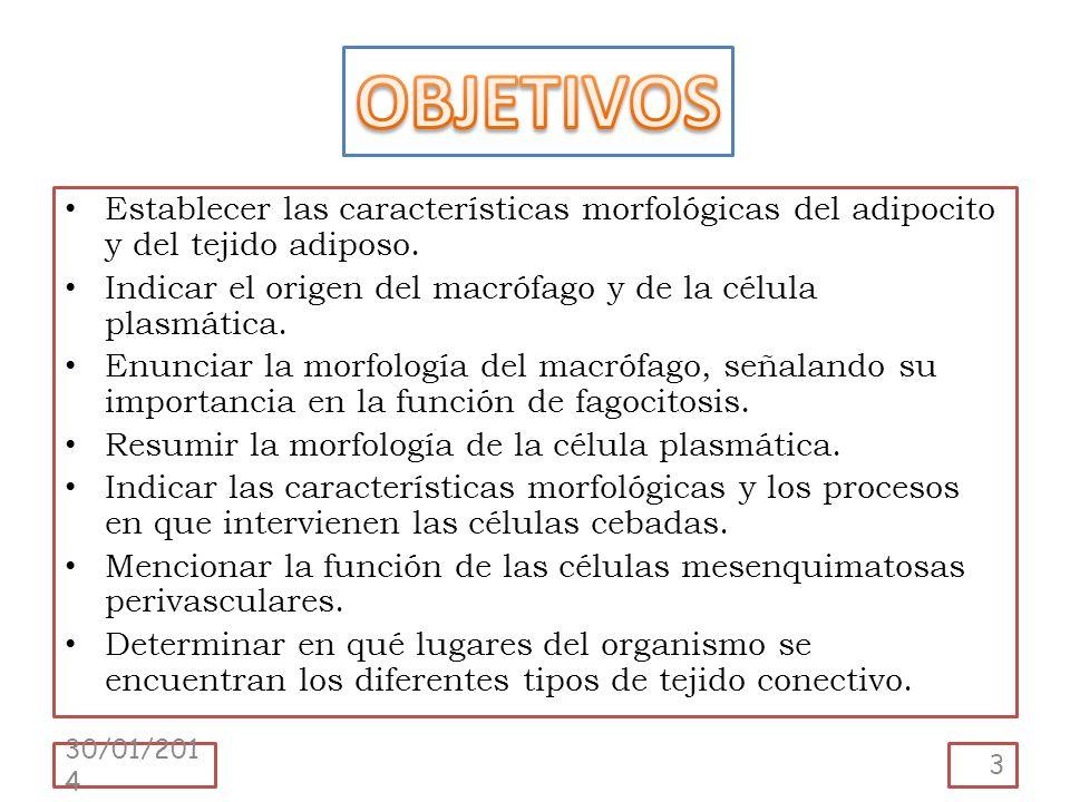 Establecer las características morfológicas del adipocito y del tejido adiposo. Indicar el origen del macrófago y de la célula plasmática. Enunciar la