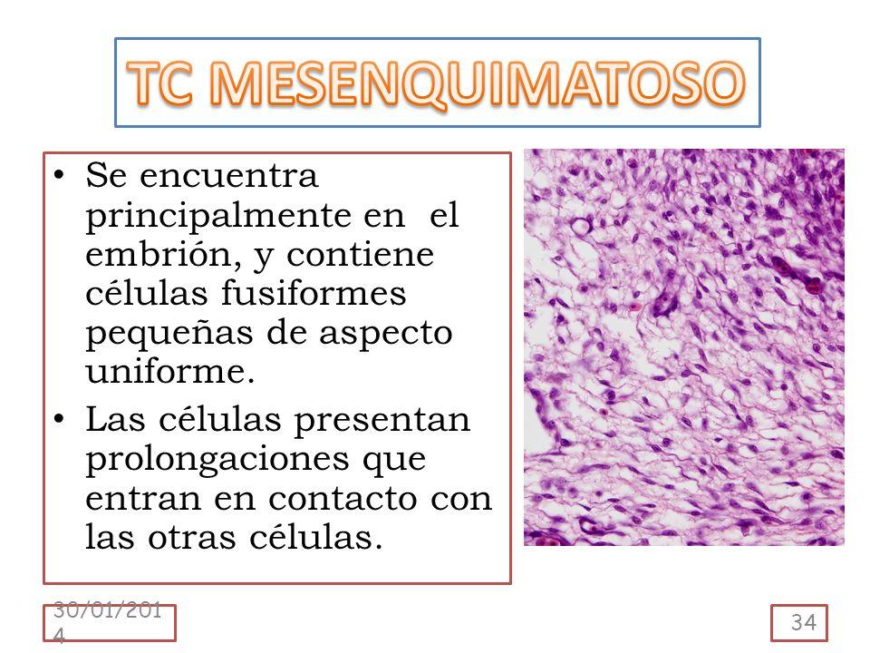 Se encuentra principalmente en el embrión, y contiene células fusiformes pequeñas de aspecto uniforme. Las células presentan prolongaciones que entran