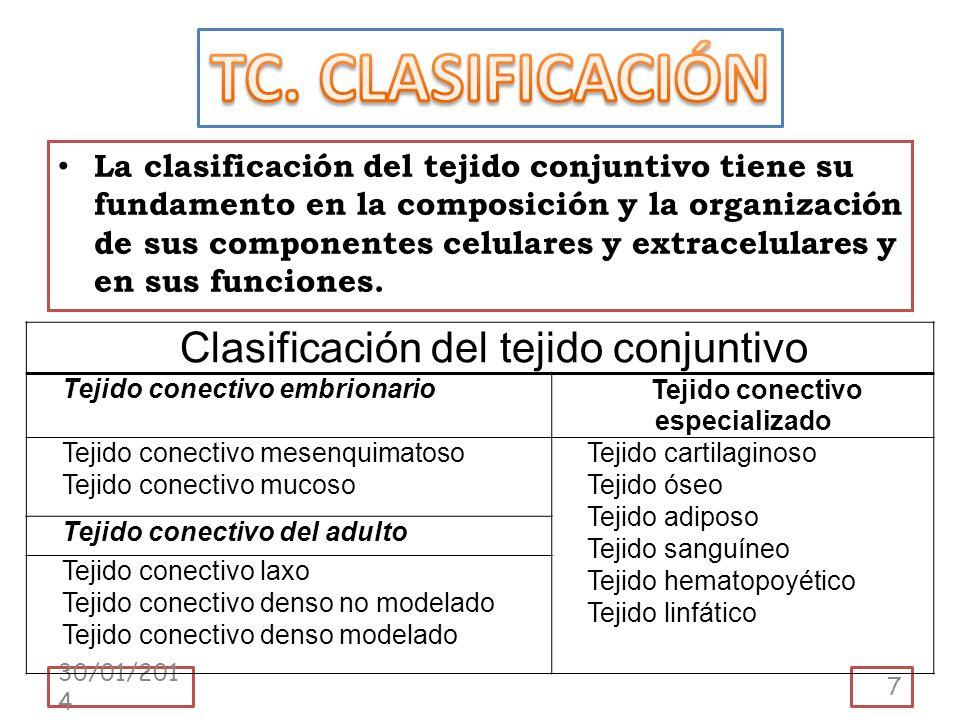 La clasificación del tejido conjuntivo tiene su fundamento en la composición y la organización de sus componentes celulares y extracelulares y en sus