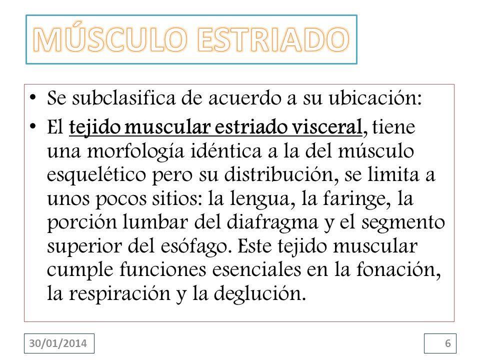 Se subclasifica de acuerdo a su ubicación: El tejido muscular estriado cardíaco, es un tipo de tejido muscular estriado que se halla en la pared del corazón y en la desembocadura de las grandes venas que llegan a este órgano.