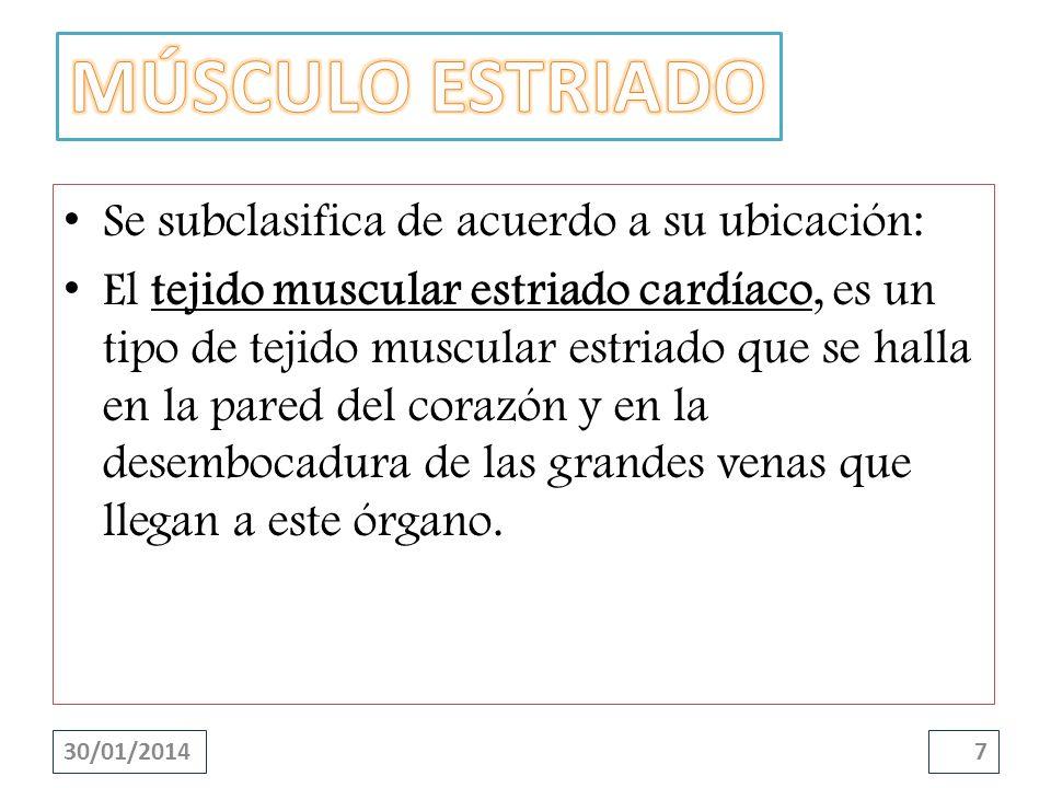 Se subclasifica de acuerdo a su ubicación: El tejido muscular estriado cardíaco, es un tipo de tejido muscular estriado que se halla en la pared del c