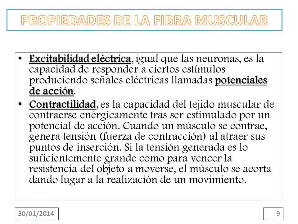 Excitabilidad eléctrica potenciales de acción Excitabilidad eléctrica, igual que las neuronas, es la capacidad de responder a ciertos estímulos produc