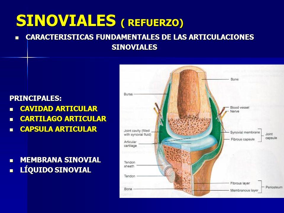 SINOVIALES ( REFUERZO) CARACTERISTICAS FUNDAMENTALES DE LAS ARTICULACIONES CARACTERISTICAS FUNDAMENTALES DE LAS ARTICULACIONESSINOVIALESPRINCIPALES: C
