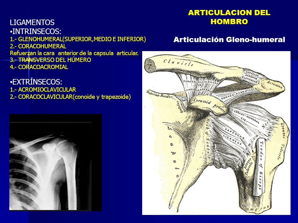 LIGAMENTOS INTRINSECOS: 1.- GLENOHUMERAL(SUPERIOR,MEDIO E INFERIOR) 2.- CORACOHUMERAL Refuerzan la cara anterior de la capsula articular. 3.- TRANSVER