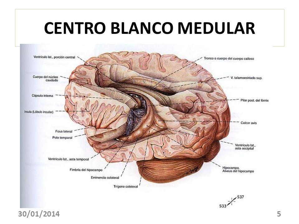 CENTRO BLANCO MEDULAR 30/01/20145