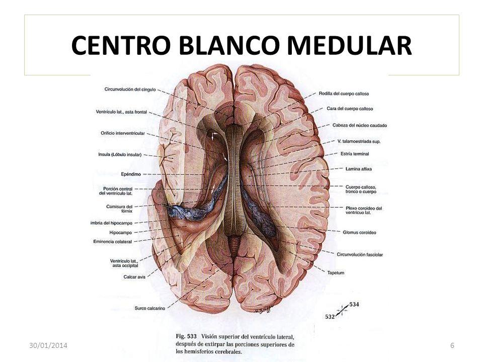 CENTRO BLANCO MEDULAR 30/01/20146